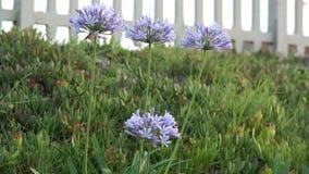 Purple  lavender wild  spring flower Stock Images