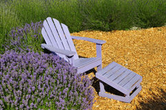 Purple lawn chair in lavender field Stock Images