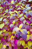 Purple leafs. The image is very colorfull Stock Image