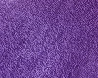 Purple leather Stock Image