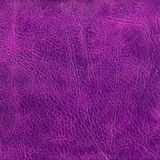 Purple leather texture to background Royalty Free Stock Images