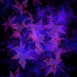 Purple leaves Royalty Free Stock Images