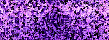 Purple leaves abstract Stock Photo