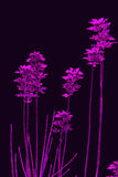 Purple leaves. On dark background Stock Illustration