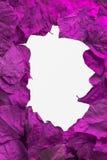 Purple leaves frame.jpg Royalty Free Stock Images