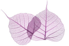 Purple leaves isolated stock photography