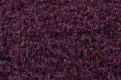 Purple leaves texture Stock Photos