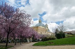 Purple leaves in trees next to San Francisco el Grande church in Madrid. Spain. Sunny day with some clouds and green garden Royalty Free Stock Photo