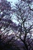 Purple leeves royalty free stock photo