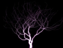 Purple Lightning tree Stock Photos