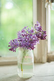 Purple lilac Stock Photography