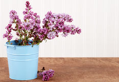 Purple lilac in a blue bucket Stock Photos