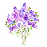 Purple lilac bouquet. Floral background. Floral background. Birthday card with flowers Royalty Free Stock Photography