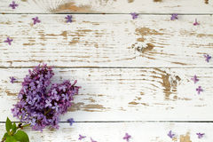 Purple lilac bush. Background with space for text. Royalty Free Stock Photos