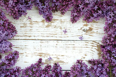 Purple lilac bush. Background with space for text. Stock Photography
