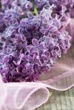 Purple lilac Stock Image