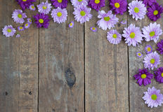 Purple and lilac daisies on wood floor background Royalty Free Stock Photos
