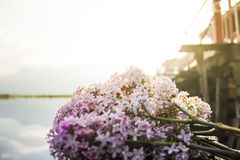 Purple lilac flower with dal lake background, srinagar, kashmir, Stock Photography