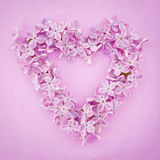 Purple lilac flower heart Stock Photos