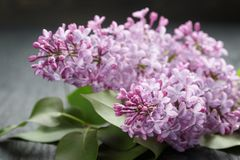 Purple lilac flower on old oak table Royalty Free Stock Image