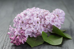 Purple lilac flower over wood table Royalty Free Stock Photos