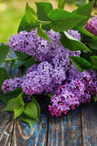 Purple lilac flowers royalty free stock image