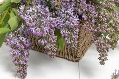 Purple lilac flowers bunch in a basket on wooden table royalty free stock photography