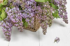 Purple lilac flowers bunch in a basket on wooden table stock photos