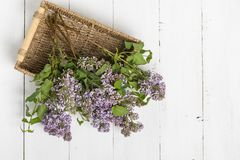 Purple lilac flowers bunch in a basket on wooden table royalty free stock image