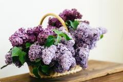 Purple lilac flowers bunch in a basket on wooden table. On white background stock photo