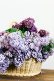 Purple lilac flowers bunch in a basket on wooden table. On white background royalty free stock photography