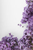 Purple lilac flowers on a white background Stock Images