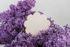 Purple lilac flowers on a white background Royalty Free Stock Image