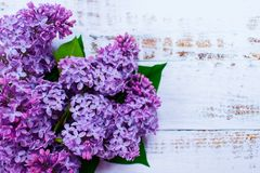 Purple lilac flowers on white wooden background. royalty free stock photos