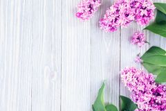 Lilac flowers background Stock Image