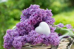 Purple lilac with heart Royalty Free Stock Image
