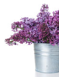 Purple lilac isolated Royalty Free Stock Image