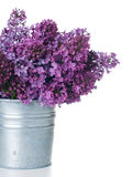 Purple lilac isolated Stock Photo