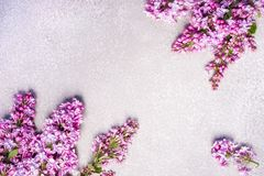 Purple lilac on a silver cement background Royalty Free Stock Photos
