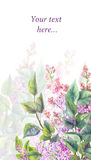 Purple lilac on a white background. Watercolor illustration Royalty Free Stock Photography