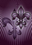 Purple lily Stock Images