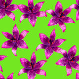 Purple lily flower watercolor seamless pattern. Bright tropical flowers isolated on green background. Royalty Free Stock Photography