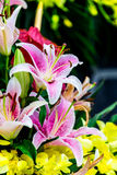 Purple Lily flowers. With yellow flowers background Stock Photography
