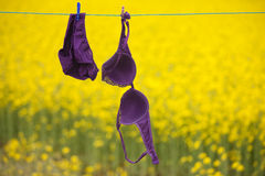 Purple lingerie drying on clothesline Royalty Free Stock Photos