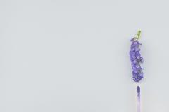 Purple lip gloss and purple flowers Stock Photos