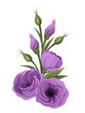 Purple lisianthus flowers. Royalty Free Stock Photos