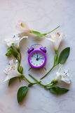Purple little alarm clock surrounded with alstroemeria flowers Stock Photos
