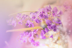 Purple little flowers. With glitter and soft background Stock Photos