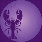 Purple Lobster Royalty Free Stock Image