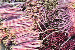 Purple long bean market Stock Image
